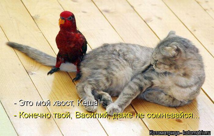 Котоматрица: - Это мой хвост, Кеша! - Конечно твой, Василий, даже не сомневайся...