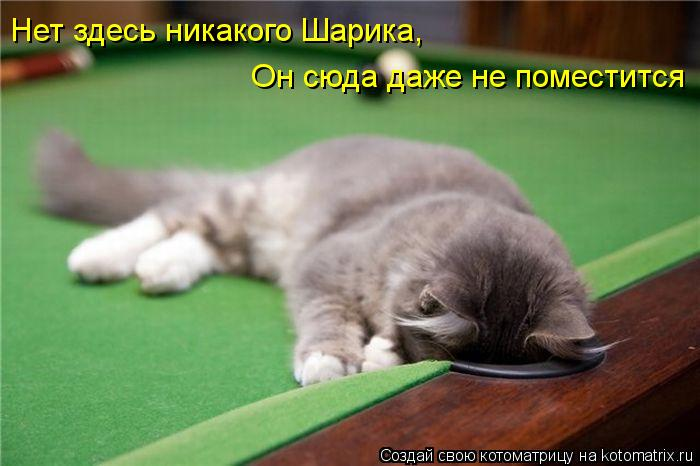 http://kotomatrix.ru/images/lolz/2012/10/25/kotomatritsa_TG.jpg