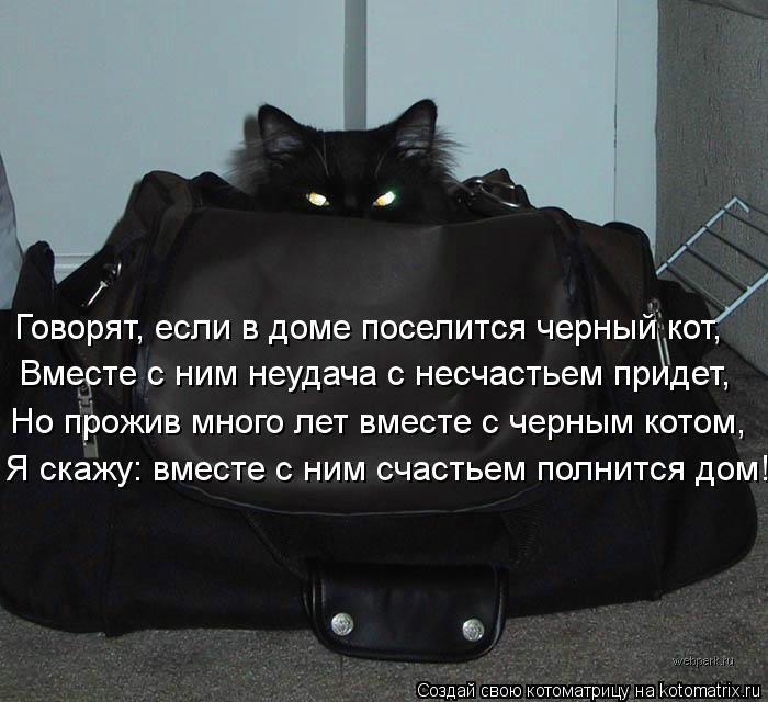 Котоматрица: Говорят, если в доме поселится черный кот, Вместе с ним неудача с несчастьем придет, Но прожив много лет вместе с черным котом, Я скажу: вмест