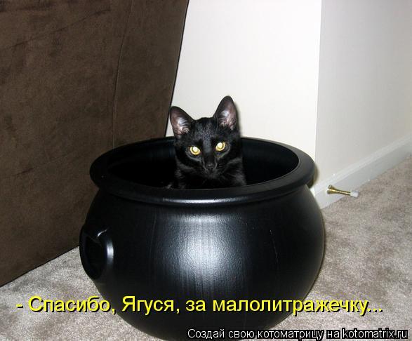 Котоматрица: - Спасибо, Ягуся, за малолитражечку...