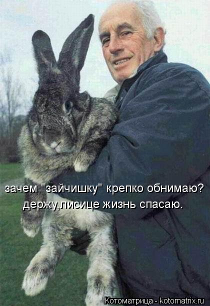 "Котоматрица: зачем ""зайчишку"" крепко обнимаю? держу,лисице жизнь спасаю."