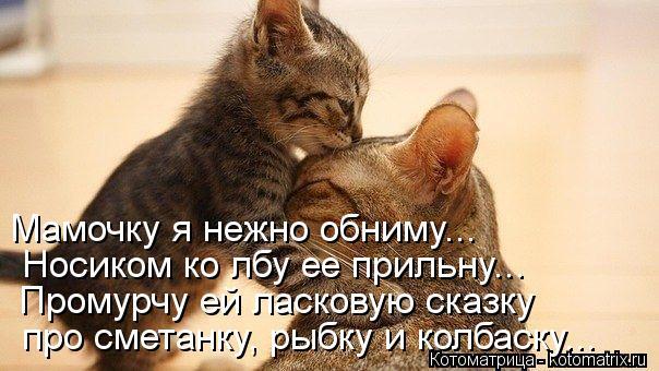 Котоматрица: Мамочку я нежно обниму...  Носиком ко лбу ее прильну...  Промурчу ей ласковую сказку  про сметанку, рыбку и колбаску...
