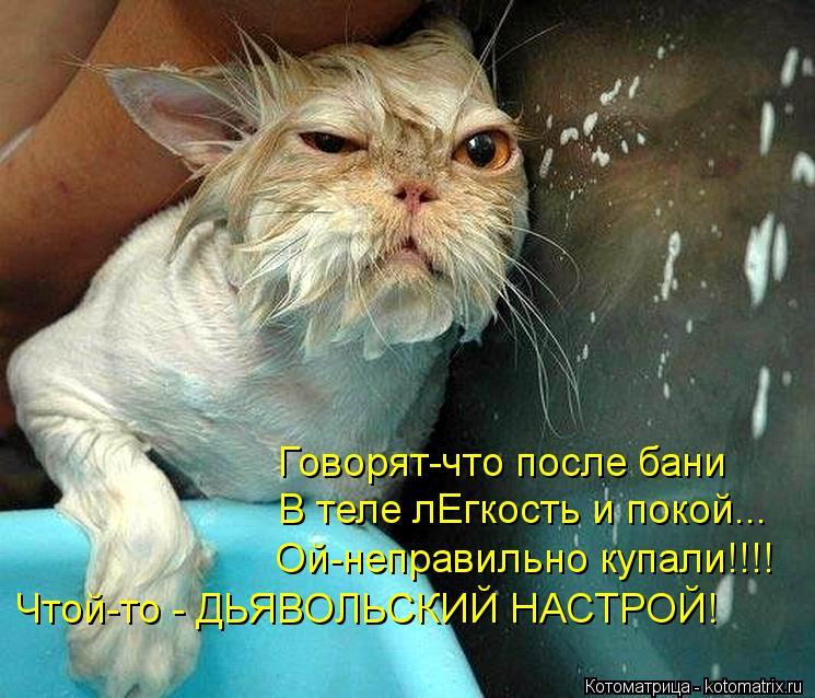 Котоматрица: Говорят-что после бани В теле лЕгкость и покой... Ой-неправильно купали!!!! Чтой-то - ДЬЯВОЛЬСКИЙ НАСТРОЙ!