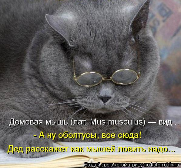 Котоматрица: Домовая мышь (лат. Mus musculus) — вид...  - А ну оболтусы, все сюда!  Дед расскажет как мышей ловить надо...