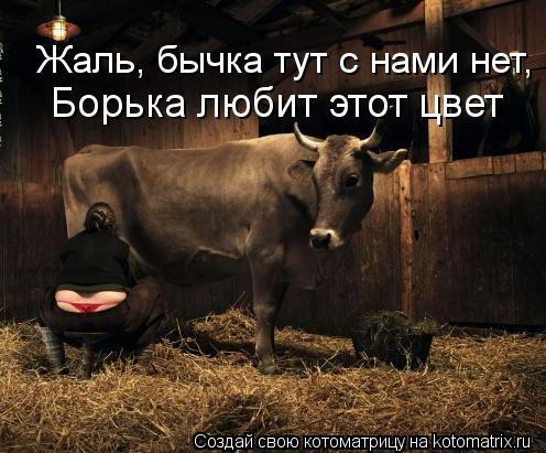 Котоматрица: Жаль, бычка тут с нами нет, Борька любит этот цвет