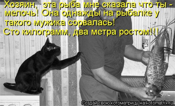 Котоматрица: Хозяин,  эта рыба мне сказала что ты - мелочь! Она однажды на рыбалке у  такого мужика сорвалась!  Сто килограмм, два метра ростом!!!