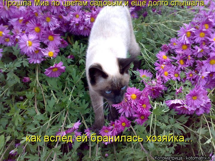Котоматрица: Прошла Миа по цветам садовым,и еще долго слышала, как вслед ей бранилась хозяйка...