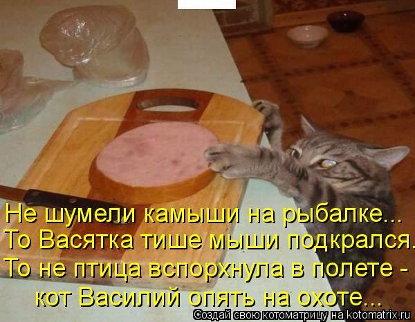 Котоматрица: Не шумели камыши на рыбалке... То Васятка тише мыши подкрался... То не птица вспорхнула в полете - кот Василий опять на охоте...
