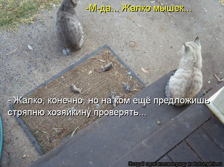 Котоматрица: -М-да... Жалко мышек... - Жалко, конечно, но на ком ещё предложишь стряпню хозяйкину проверять...