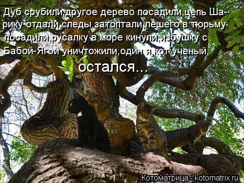 Котоматрица: Дуб срубили,другое дерево посадили,цепь Ша- рику отдали,следы затоптали,лешего в тюрьму  посадили,русалку в море кинули,избушку с  Бабой-Яго