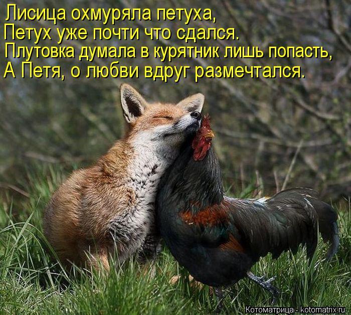 Котоматрица: Лисица охмуряла петуха, Петух уже почти что сдался. Плутовка думала в курятник лишь попасть, А Петя, о любви вдруг размечтался.
