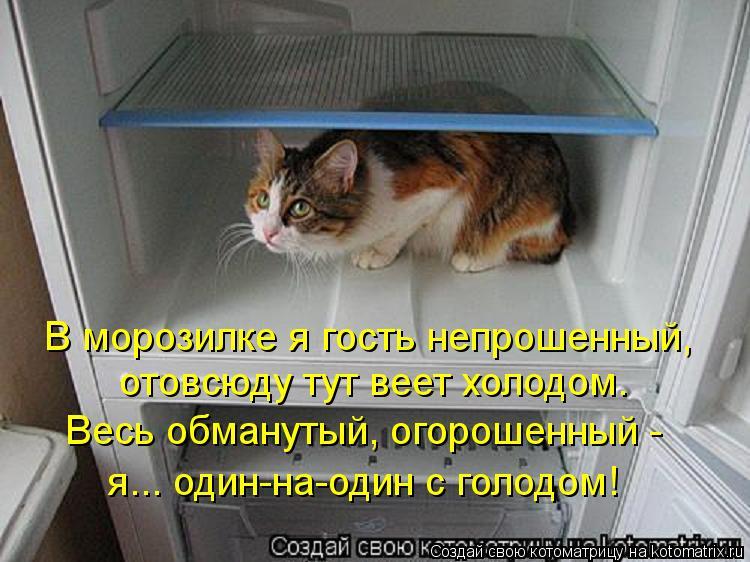 Котоматрица: В морозилке я гость непрошенный, отовсюду тут веет холодом. Весь обманутый, огорошенный -  я... один-на-один с голодом!