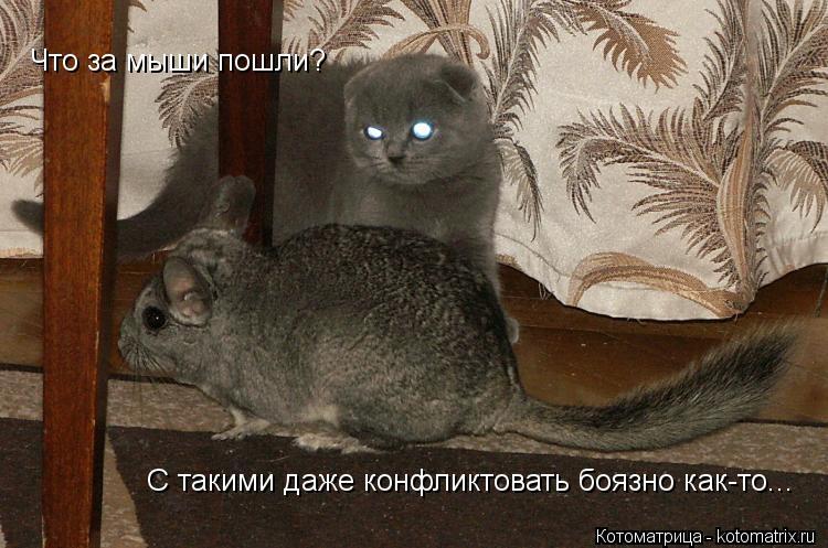 Котоматрица: Что за мыши пошли?  С такими даже конфликтовать боязно как-то...