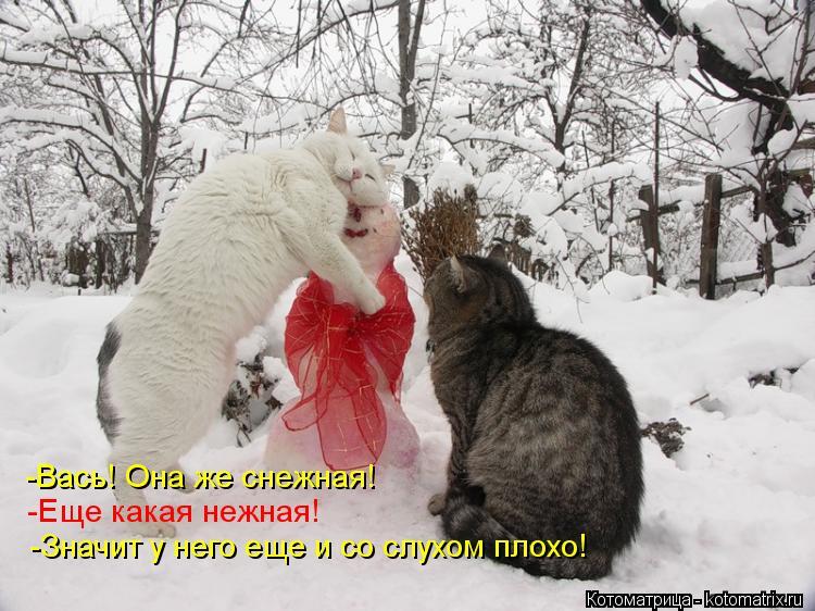 Котоматрица: -Вась! Она же снежная! -Еще какая нежная! -Значит у него еще и со слухом плохо!