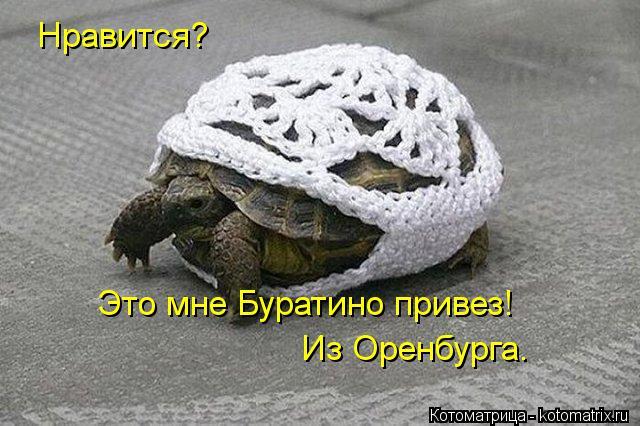 Котоматрица: Нравится? Это мне Буратино привез! Из Оренбурга.