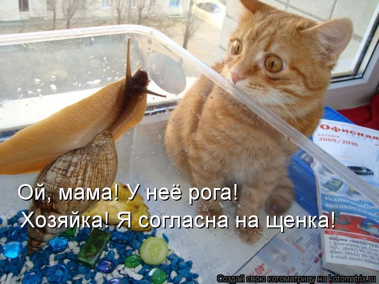 Котоматрица: Ой, мама! У неё рога! Хозяйка! Я согласна на щенка!