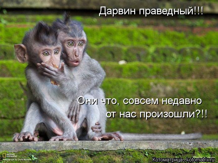 Котоматрица: Дарвин праведный!!! Они что, совсем недавно от нас произошли?!!