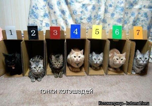 Котоматрица: гонки котэшадей