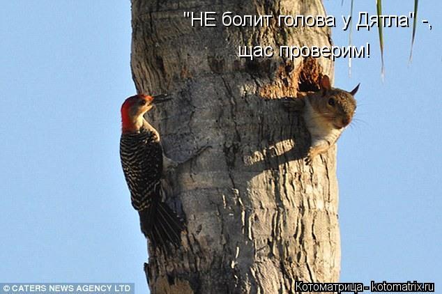 kotomatritsa_0k.jpg