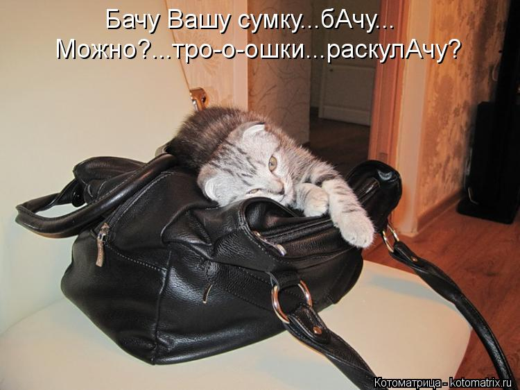 Котоматрица: Бачу Вашу сумку...бАчу... Можно?...тро-о-ошки...раскулАчу?