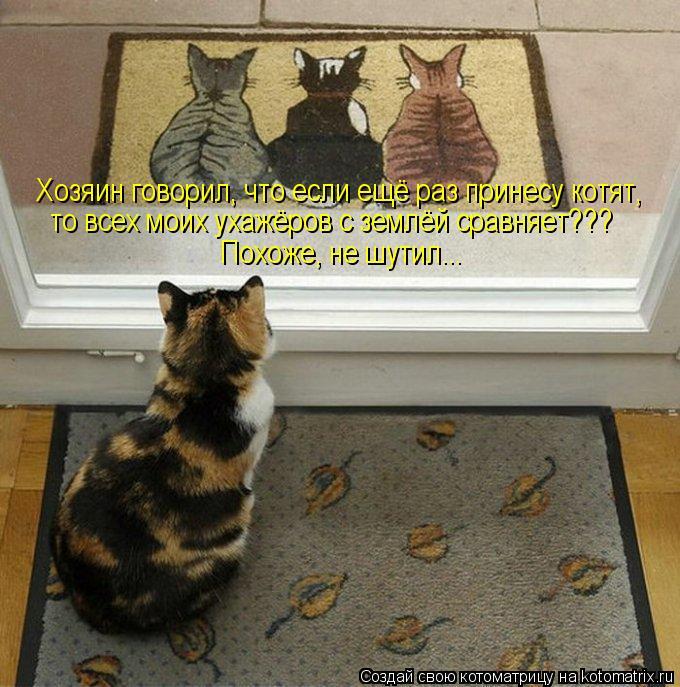 Котоматрица: Хозяин говорил, что если ещё раз принесу котят,  то всех моих ухажёров с землёй сравняет???  Похоже, не шутил...