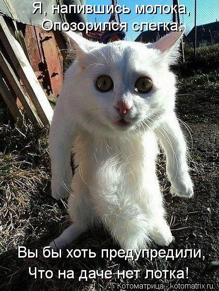 Котоматрица: Я, напившись молока, Опозорился слегка: Вы бы хоть предупредили, Что на даче нет лотка!