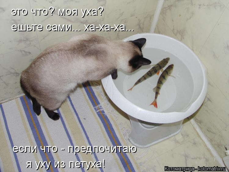 Котоматрица: это что? моя уха? ешьте сами... ха-ха-ха... если что - предпочитаю я уху из петуха!