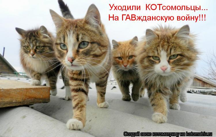 Котоматрица: Уходили  КОТсомольцы... На ГАВжданскую войну!!!