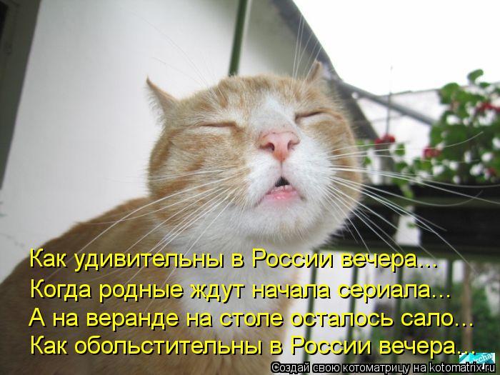 Котоматрица: Как удивительны в России вечера... Когда родные ждут начала сериала... А на веранде на столе осталось сало... Как обольстительны в России вече