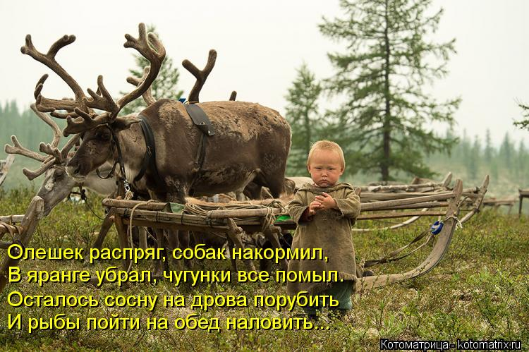 Котоматрица: Олешек распряг, собак накормил, В яранге убрал, чугунки все помыл. Осталось сосну на дрова порубить И рыбы пойти на обед наловить...