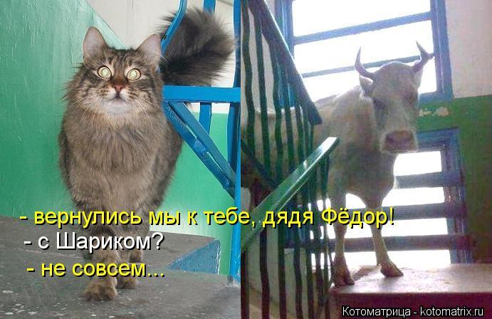 Котоматрица: - вернулись мы к тебе, дядя Фёдор! - с Шариком? - не совсем...