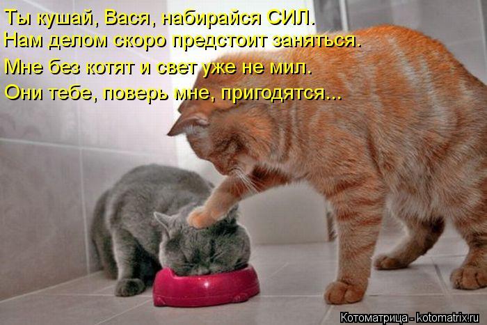 Котоматрица: Нам делом скоро предстоит заняться. Мне без котят и свет уже не мил. Они тебе, поверь мне, пригодятся... Ты кушай, Вася, набирайся СИЛ.