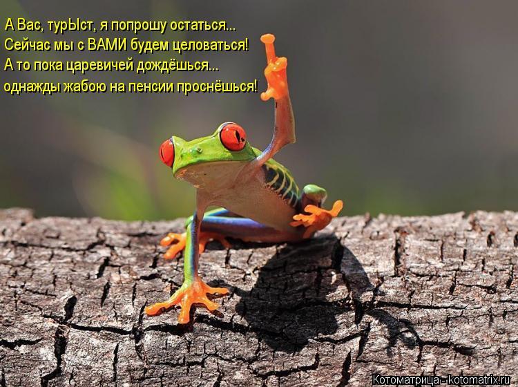 Котоматрица: А Вас, турЫст, я попрошу остаться... Сейчас мы с ВАМИ будем целоваться! А то пока царевичей дождёшься... однажды жабою на пенсии проснёшься!
