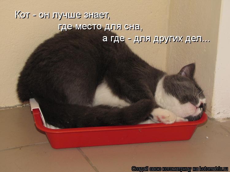 Котоматрица: Кот - он лучше знает, где место для сна, а где - для других дел...