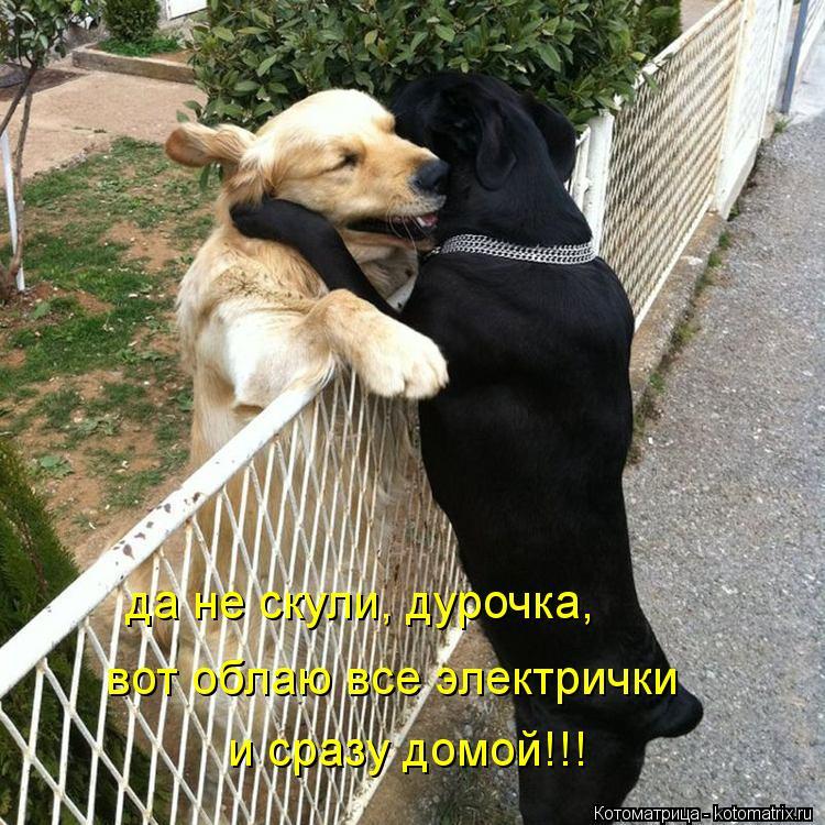 http://kotomatrix.ru/images/lolz/2012/10/30/kotomatritsa_3Wm.jpg