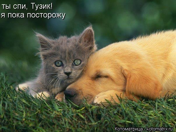 Котоматрица: ты спи, Тузик! я пока посторожу