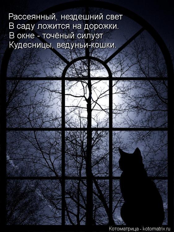Котоматрица: Рассеянный, нездешний свет В саду ложится на дорожки. В окне - точёный силуэт Кудесницы, ведуньи-кошки.