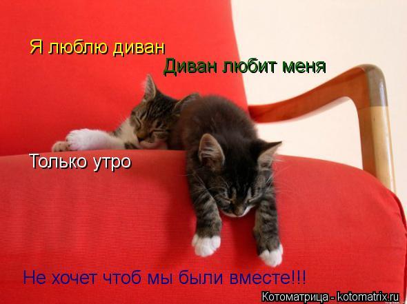 Котоматрица: Я люблю диван  Диван любит меня  Только утро  Не хочет чтоб мы были вместе!!!