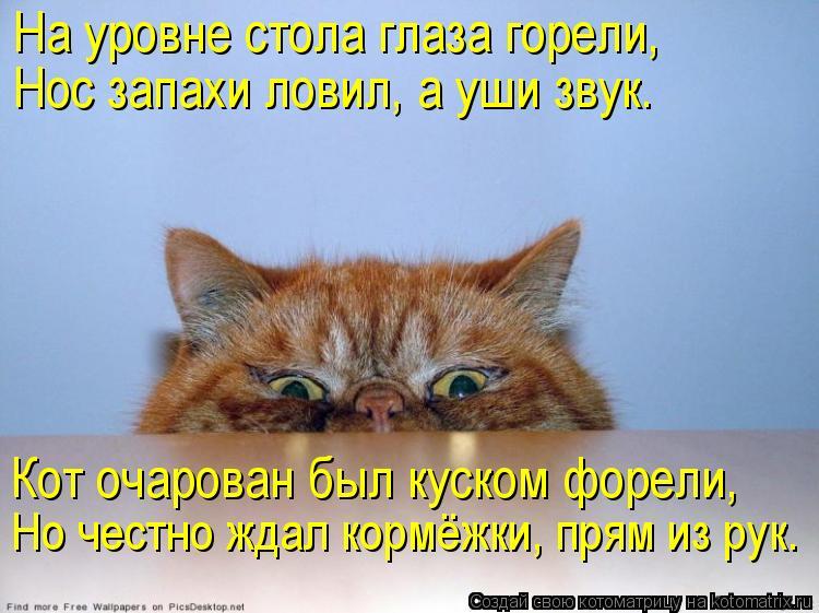 Котоматрица: На уровне стола глаза горели, Нос запахи ловил, а уши звук. Кот очарован был куском форели, Но честно ждал кормёжки, прям из рук.