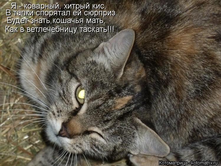 Котоматрица: Я - коварный, хитрый кис, В тапки спорятал ей сюрприз. Будет знать,кошачья мать, Как в ветлечебницу таскать!!!