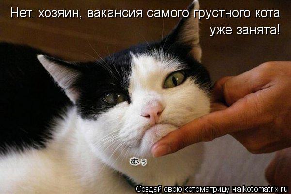 Котоматрица: Нет, хозяин, вакансия самого грустного кота уже занята!