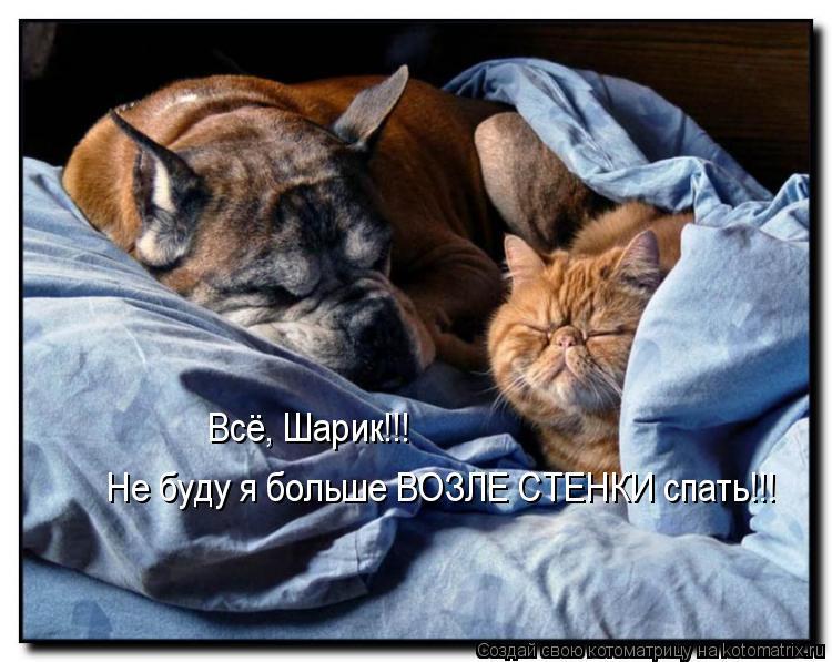 Котоматрица: Всё, Шарик!!!  Не буду я больше ВОЗЛЕ СТЕНКИ спать!!!