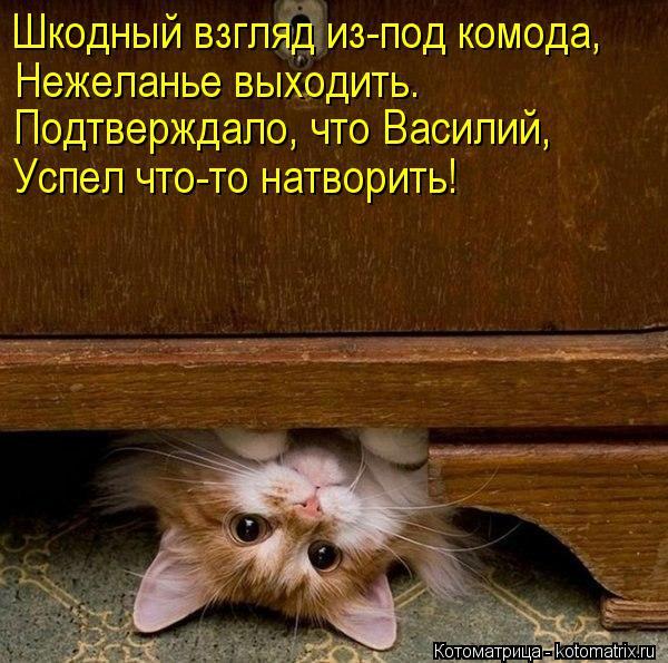 Котоматрица: Шкодный взгляд из-под комода, Нежеланье выходить. Подтверждало, что Василий, Успел что-то натворить!