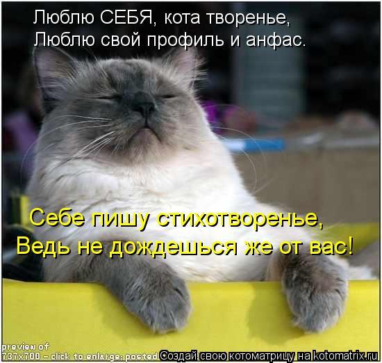 Котоматрица: Люблю СЕБЯ, кота творенье, Люблю свой профиль и анфас. Себе пишу стихотворенье, Ведь не дождешься же от вас!