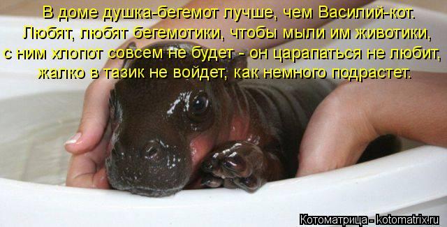 http://kotomatrix.ru/images/lolz/2012/10/30/kotomatritsa_qH.jpg