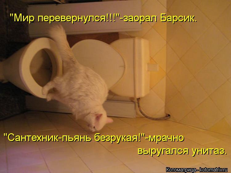 """Котоматрица: """"Мир перевернулся!!!""""-заорал Барсик. """"Сантехник-пьянь безрукая!""""-мрачно  выругался унитаз."""