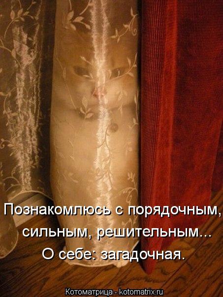 Котоматрица: Познакомлюсь с порядочным, сильным, решительным... О себе: загадочная.