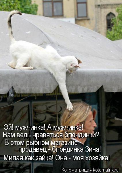 Котоматрица: Вам ведь нравяться блондинки? Эй! мужчинка! А мужчинка!  В этом рыбном магазине  продавец - блондинка Зина!  Милая как зайка! Она - моя хозяйка!