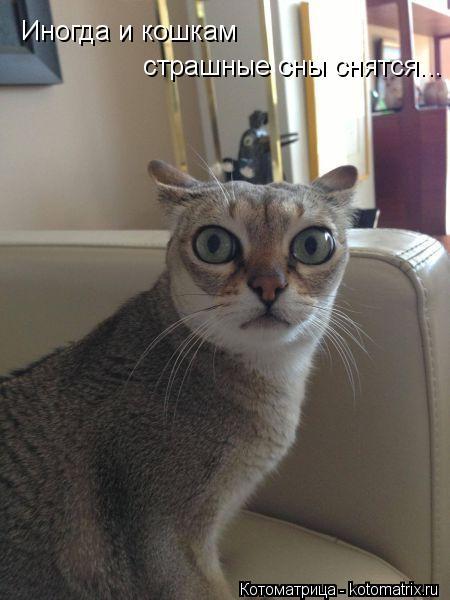 Котоматрица: Иногда и кошкам страшные сны снятся...