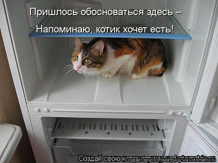 Котоматрица: Пришлось обосноваться здесь – Напоминаю, котик хочет есть!
